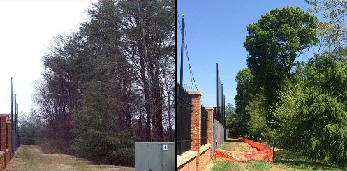 Before and after Virginia Pine removal